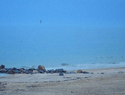 Веб-камера «Кораловий острів»